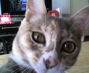 この猫、凶暴につき_a0101143_11311899.jpg