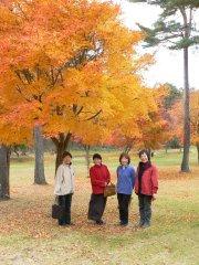 富士見ヨドバシカメラ内の紅葉_f0019247_2143899.jpg