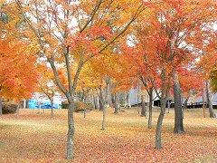 富士見ヨドバシカメラ内の紅葉_f0019247_2152479.jpg