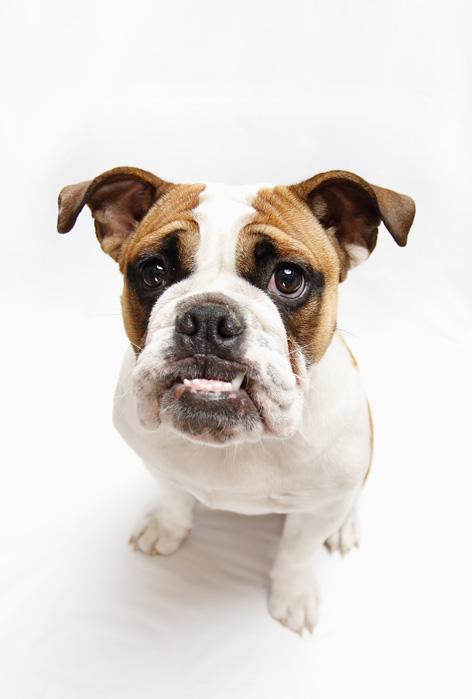 Bulldog_d0101050_23311937.jpg