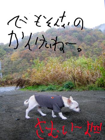 b0116162_8381628.jpg