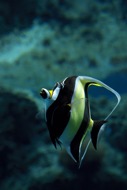 美ら海水族館・1_f0018464_1840338.jpg