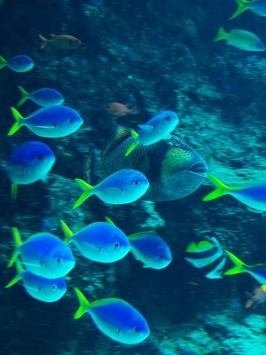 美ら海水族館・1_f0018464_18405731.jpg