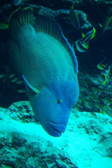 美ら海水族館・1_f0018464_1841346.jpg