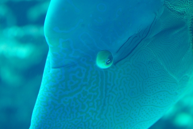 美ら海水族館・1_f0018464_19191458.jpg