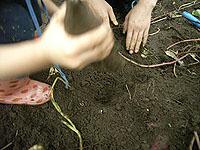 芋掘り地鎮祭_f0088873_18221580.jpg