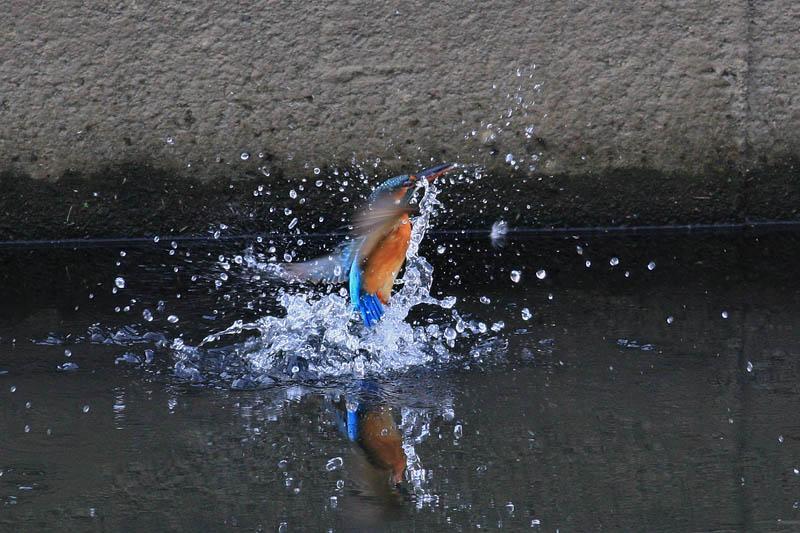水浴びア・ラ・カ・ル・ト_b0024798_6244473.jpg