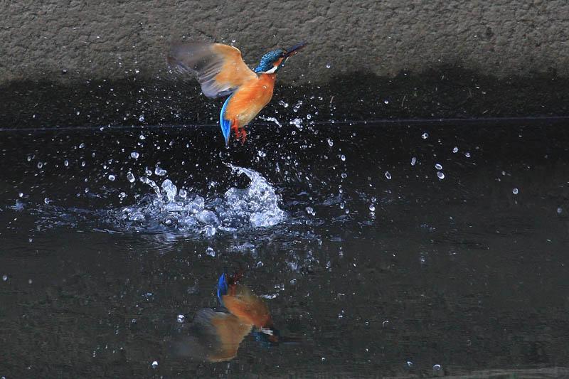 水浴びア・ラ・カ・ル・ト_b0024798_6245457.jpg