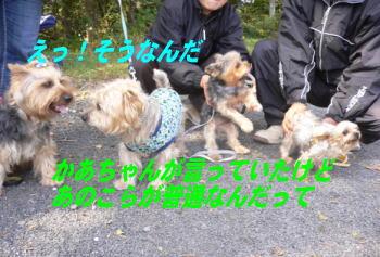 d0013645_120464.jpg