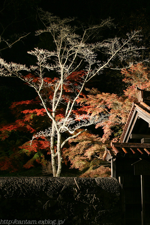 国宝 閑谷学校 紅葉ライトアップ_f0091955_22444533.jpg