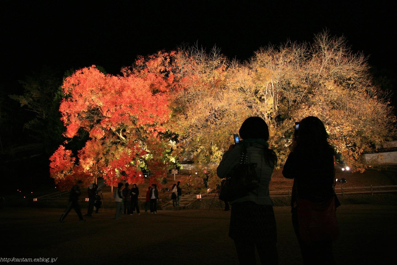 国宝 閑谷学校 紅葉ライトアップ_f0091955_22445391.jpg