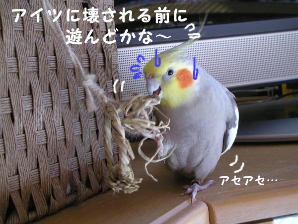 f0132055_23113167.jpg