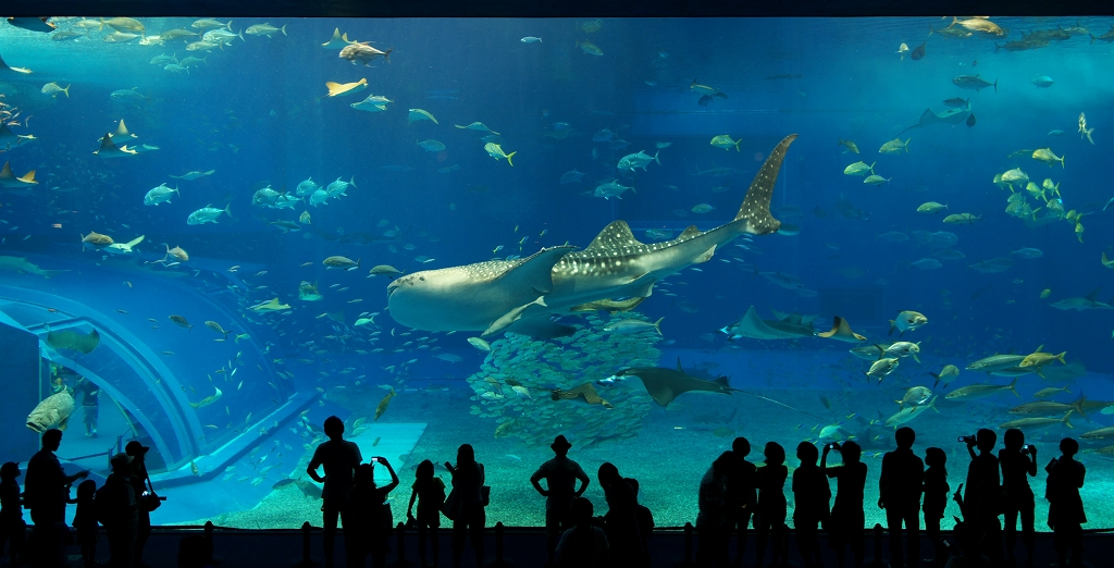 美ら海水族館・2_f0018464_18185174.jpg