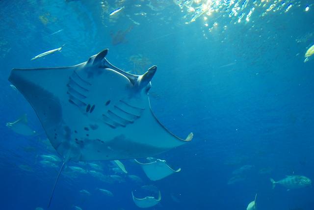 美ら海水族館・2_f0018464_1846653.jpg