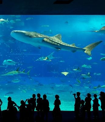 美ら海水族館・2_f0018464_18503483.jpg