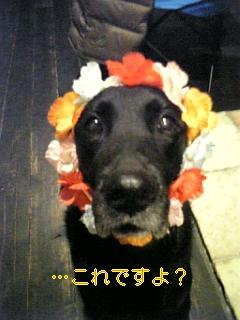 はぴば!!!_f0148927_1931187.jpg