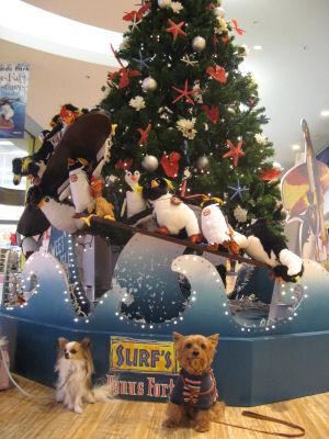 """1階ペンギンさんツリー前♪"""""""