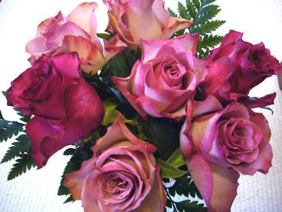 11月の薔薇---ハロウィン・サナ_f0105054_18545010.jpg