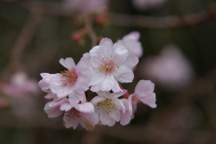 紅葉と桜が出逢う場所_e0051888_1782946.jpg