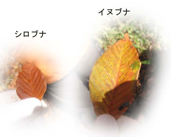 d0080118_2245478.jpg