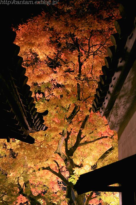 国宝 閑谷学校 紅葉ライトアップ #2_f0091955_20493152.jpg