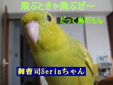 b0082757_21201481.jpg