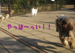 b0063399_039185.jpg