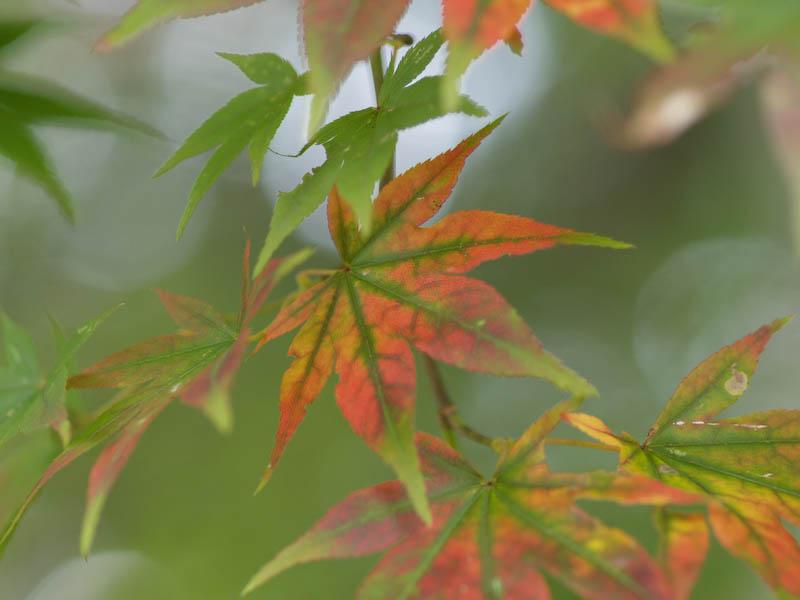1, 秋の海岸寺を色んなレンズで楽しみました、ZUIKO MACRO 90mm F2編_c0137403_1834315.jpg