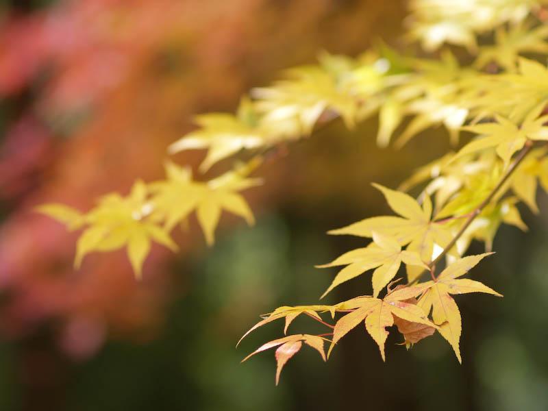 1, 秋の海岸寺を色んなレンズで楽しみました、ZUIKO MACRO 90mm F2編_c0137403_18352795.jpg