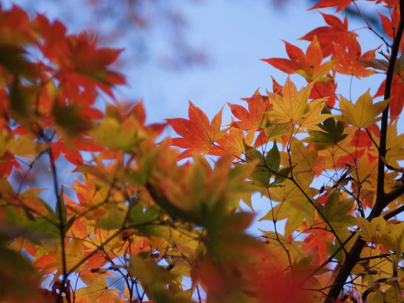 1, 秋の海岸寺を色んなレンズで楽しみました、ZUIKO MACRO 90mm F2編_c0137403_1835598.jpg