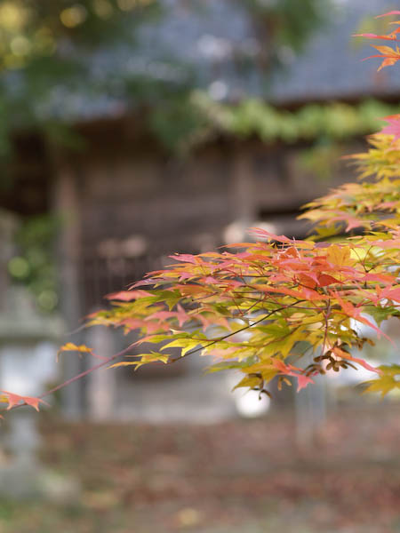 1, 秋の海岸寺を色んなレンズで楽しみました、ZUIKO MACRO 90mm F2編_c0137403_18362592.jpg