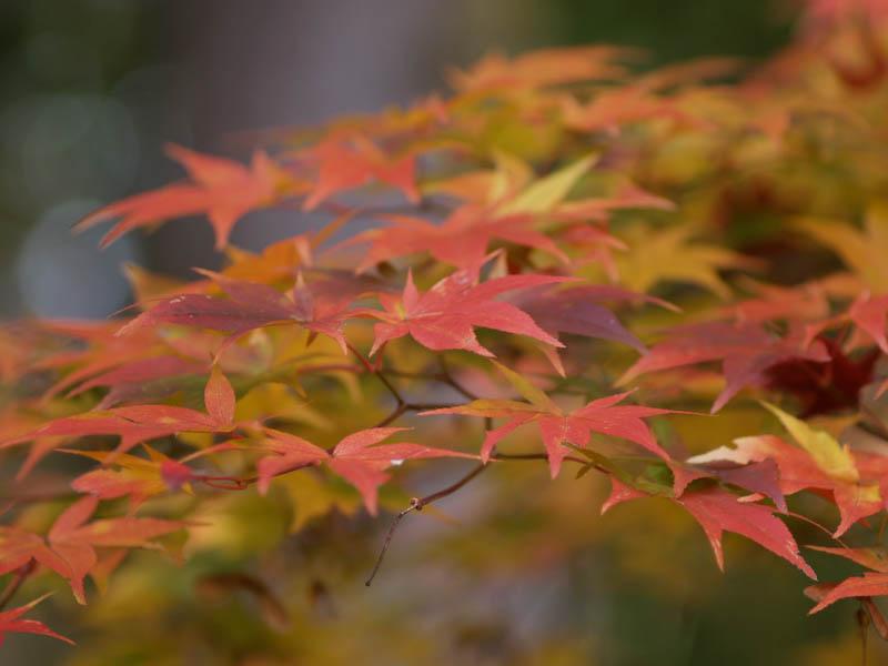 1, 秋の海岸寺を色んなレンズで楽しみました、ZUIKO MACRO 90mm F2編_c0137403_1837276.jpg