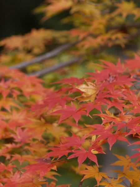 1, 秋の海岸寺を色んなレンズで楽しみました、ZUIKO MACRO 90mm F2編_c0137403_18375177.jpg