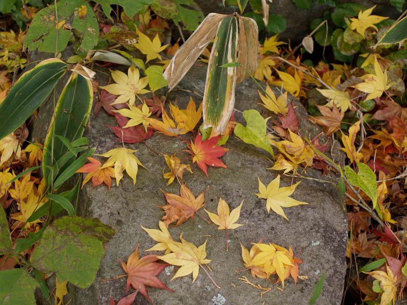 1, 秋の海岸寺を色んなレンズで楽しみました、ZUIKO MACRO 90mm F2編_c0137403_18381476.jpg