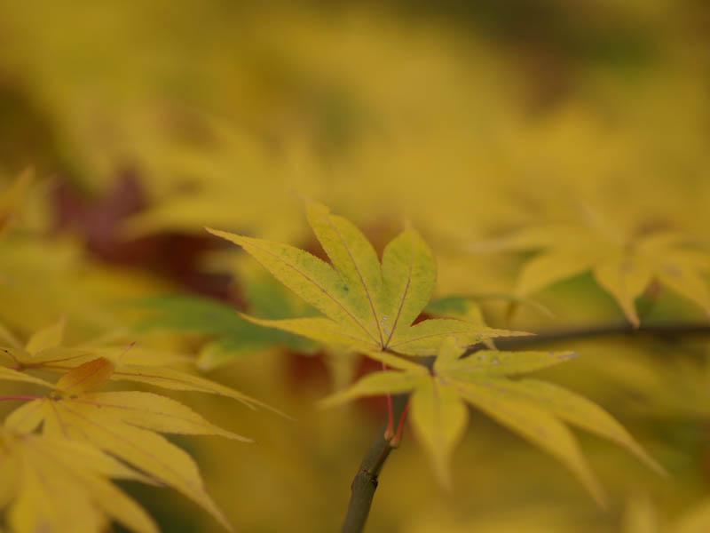 1, 秋の海岸寺を色んなレンズで楽しみました、ZUIKO MACRO 90mm F2編_c0137403_18411410.jpg