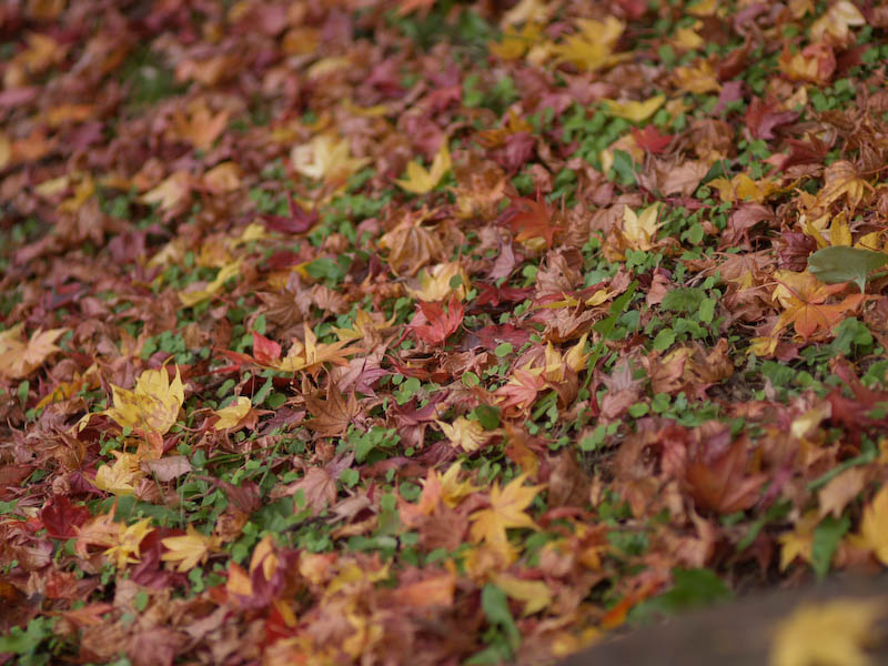 1, 秋の海岸寺を色んなレンズで楽しみました、ZUIKO MACRO 90mm F2編_c0137403_18414383.jpg