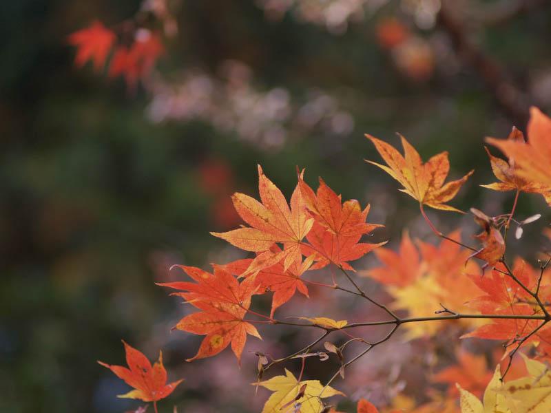 1, 秋の海岸寺を色んなレンズで楽しみました、ZUIKO MACRO 90mm F2編_c0137403_1842973.jpg