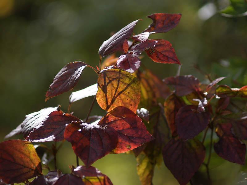 1, 秋の海岸寺を色んなレンズで楽しみました、ZUIKO MACRO 90mm F2編_c0137403_1843129.jpg