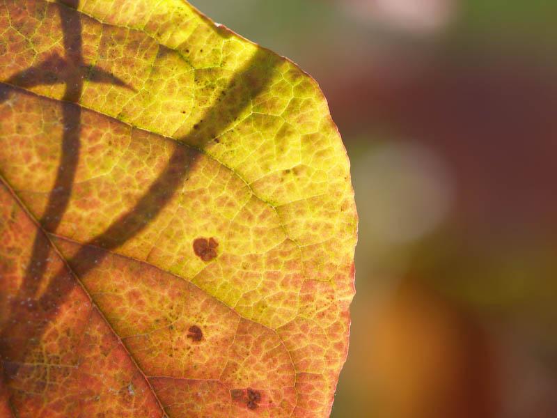 1, 秋の海岸寺を色んなレンズで楽しみました、ZUIKO MACRO 90mm F2編_c0137403_18434878.jpg