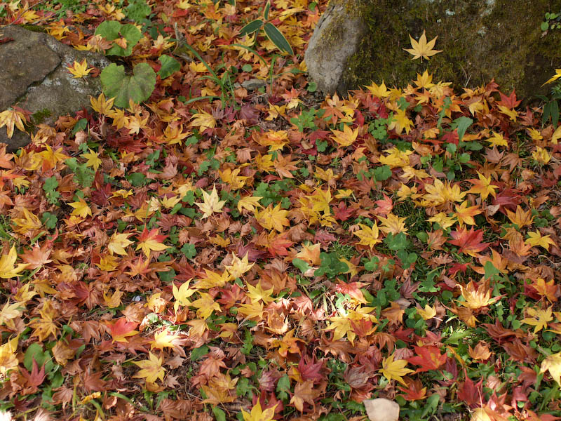 秋の海岸寺を色んなレンズで楽しみました、Carl Zeiss Distagon 25mm F2.8編_c0137403_190164.jpg