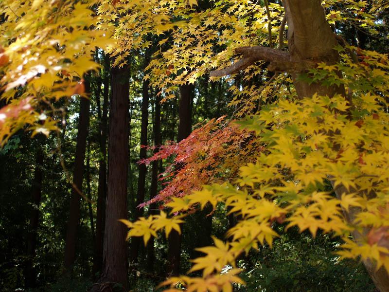 秋の海岸寺を色んなレンズで楽しみました、Carl Zeiss Distagon 25mm F2.8編_c0137403_1903370.jpg