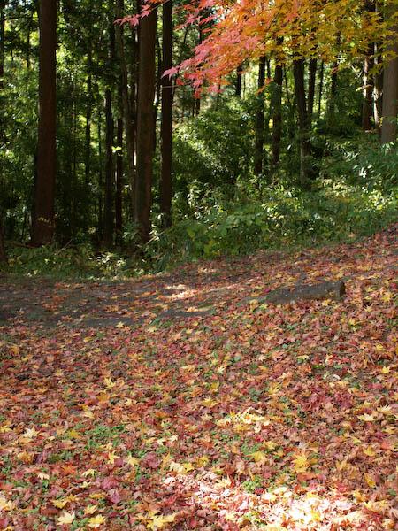 秋の海岸寺を色んなレンズで楽しみました、Carl Zeiss Distagon 25mm F2.8編_c0137403_191128.jpg