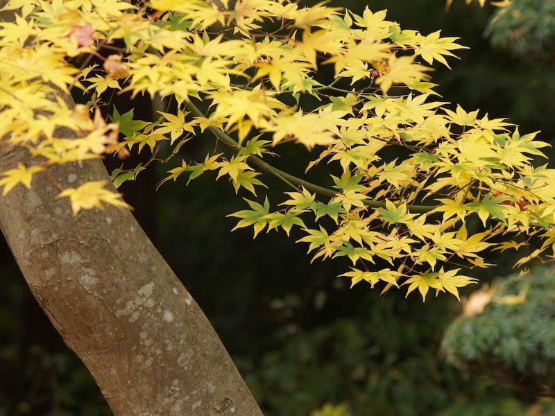 秋の海岸寺を色んなレンズで楽しみました、APO-LANTHAR 180mm 編_c0137403_19122582.jpg