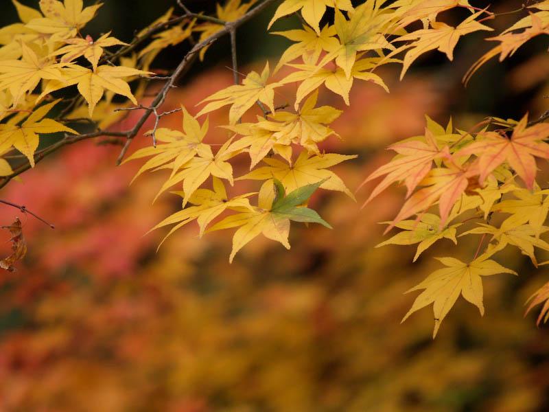 秋の海岸寺を色んなレンズで楽しみました、APO-LANTHAR 180mm 編_c0137403_19124661.jpg