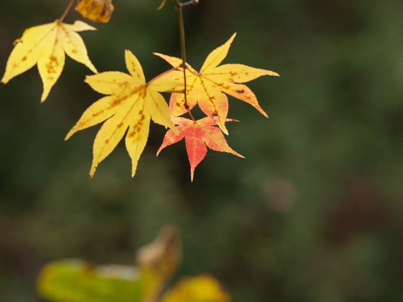 秋の海岸寺を色んなレンズで楽しみました、APO-LANTHAR 180mm 編_c0137403_19132527.jpg