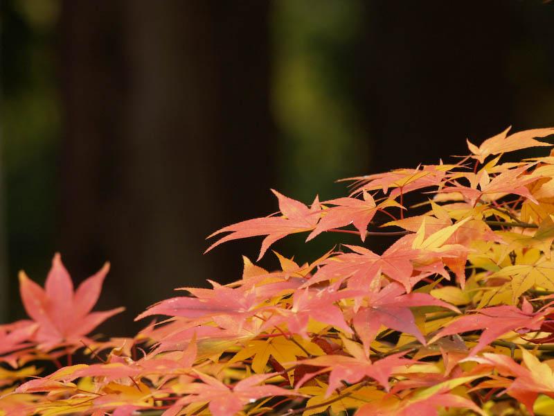 秋の海岸寺を色んなレンズで楽しみました、APO-LANTHAR 180mm 編_c0137403_19134328.jpg