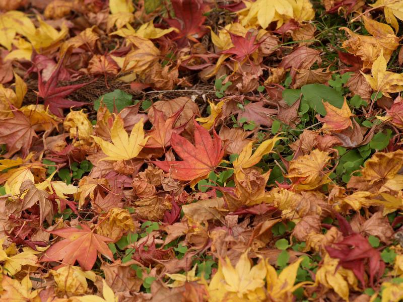 秋の海岸寺を色んなレンズで楽しみました、APO-LANTHAR 180mm 編_c0137403_1913961.jpg
