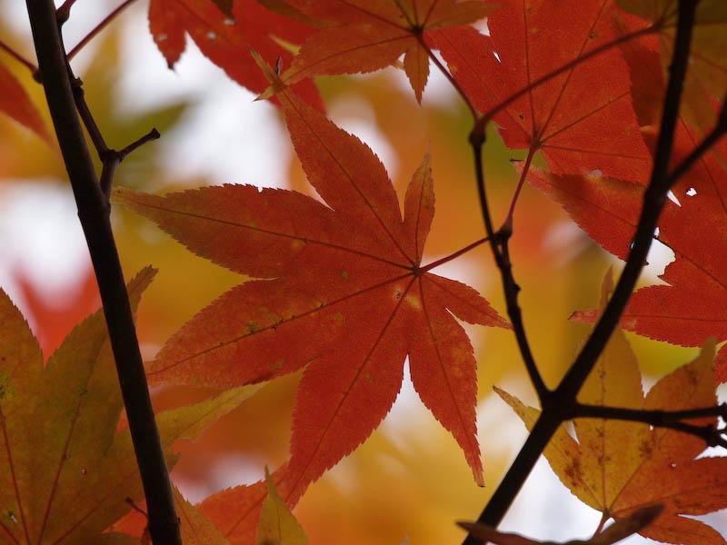 秋の海岸寺を色んなレンズで楽しみました、APO-LANTHAR 180mm 編_c0137403_1914544.jpg