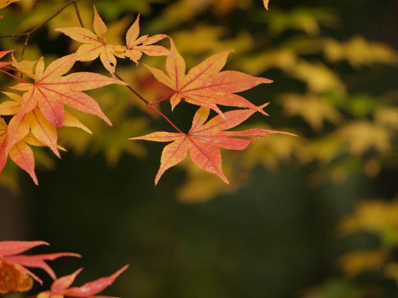 秋の海岸寺を色んなレンズで楽しみました、APO-LANTHAR 180mm 編_c0137403_1915756.jpg