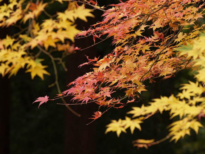 秋の海岸寺を色んなレンズで楽しみました、APO-LANTHAR 180mm 編_c0137403_19172241.jpg